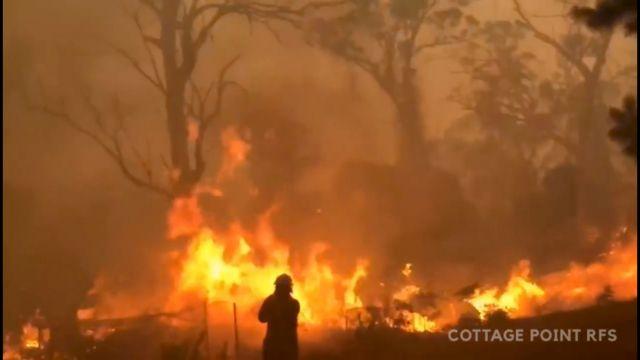 Oι πυρκαγιές έχουν αφανίσει σχεδόν μισό δισεκατομμύριο ζώα και φυτά στην Αυστραλία